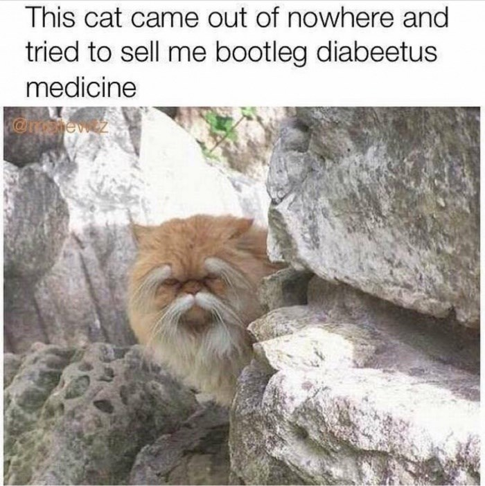 Text - This cat came out of nowhere and tried to sell me bootleg diabeetus medicine
