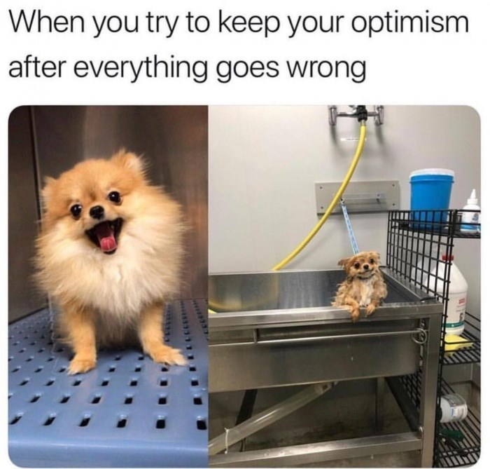 Dog - When you try to keep your optimism after everything goes wrong