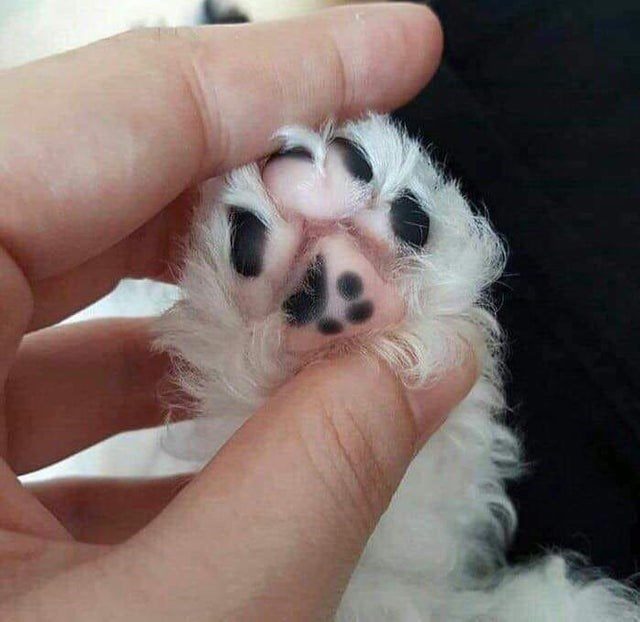 cat beans - Puppy