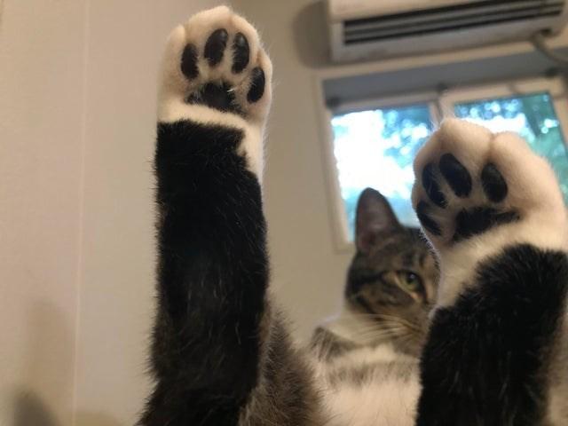 cat beans - Mammal