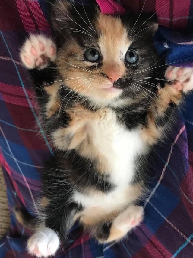 cat beans - Cat