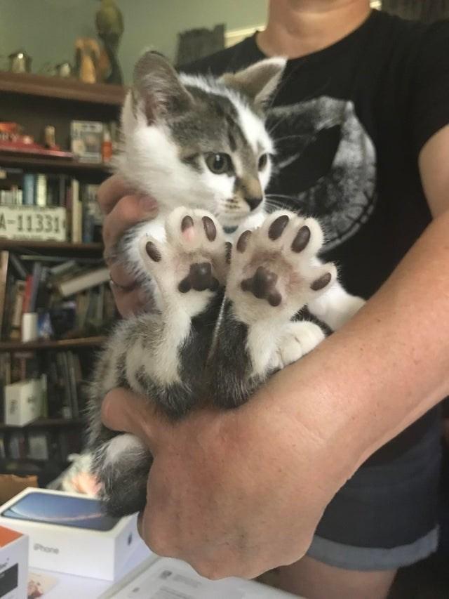 cat beans - Cat - 4-11331 Phone
