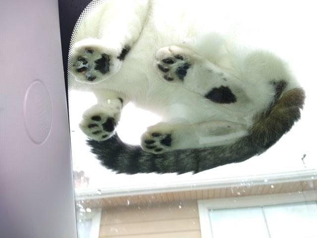 cat beans - Panda