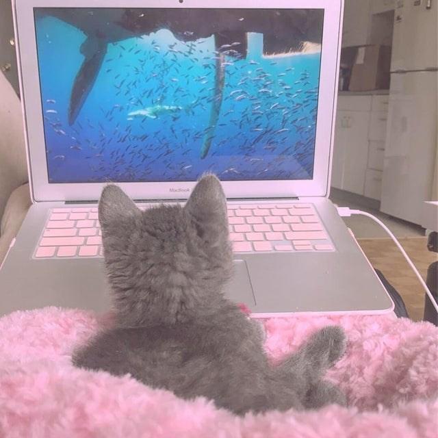 cat vs technology - Cat - Macook