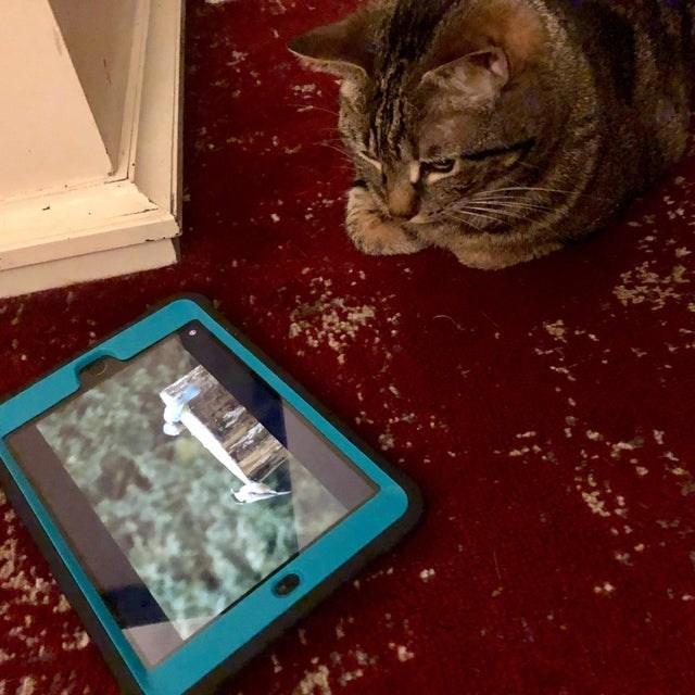 cat vs technology - Cat