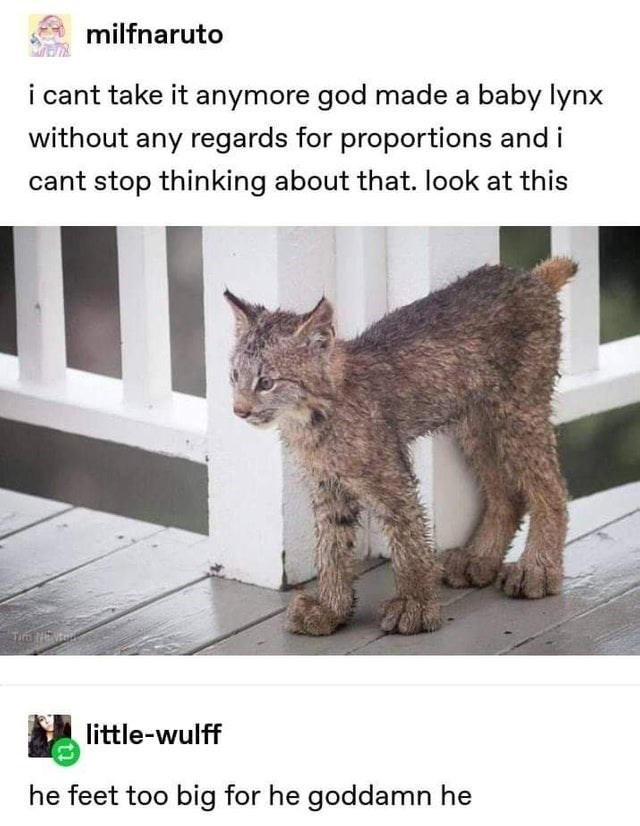 Cat - milfnaruto i cant take it anymore god made a baby lynx without any regards for proportions and i cant stop thinking about that. look at this little-wulff he feet too big for he goddamn he