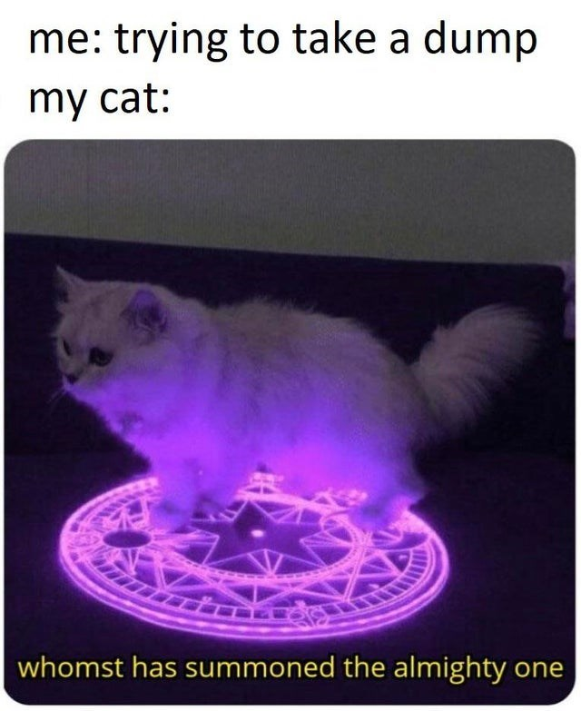 Cat - me: trying to take a dump my cat: whomst has summoned the almighty one
