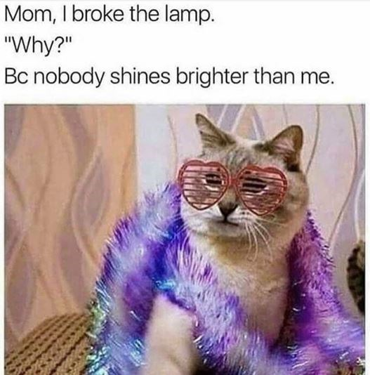 """Cat - Mom, I broke the lamp. """"Why?"""" Bc nobody shines brighter than me."""