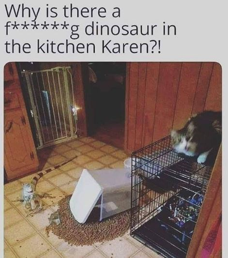 Cat - Why is there a f** g dinosaur in the kitchen Karen?!