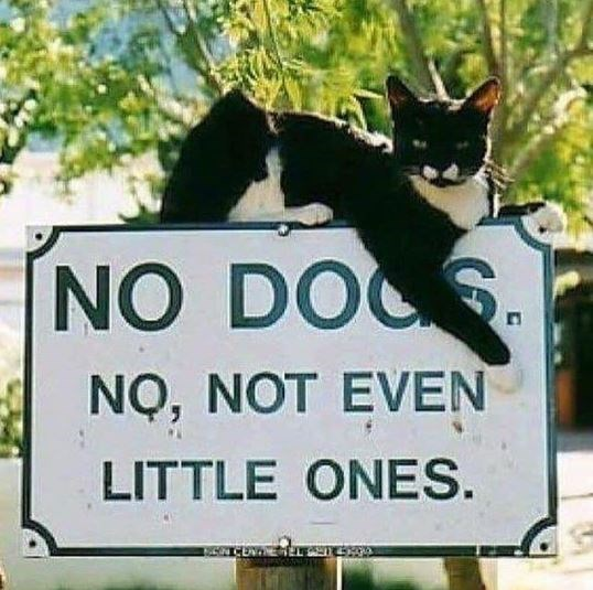 Cat - NO DOS NQ, NOT EVEN LITTLE ONES.