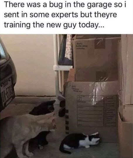 Cat - There was a bug in the garage so i sent in some experts but theyre training the new guy today... -FRE