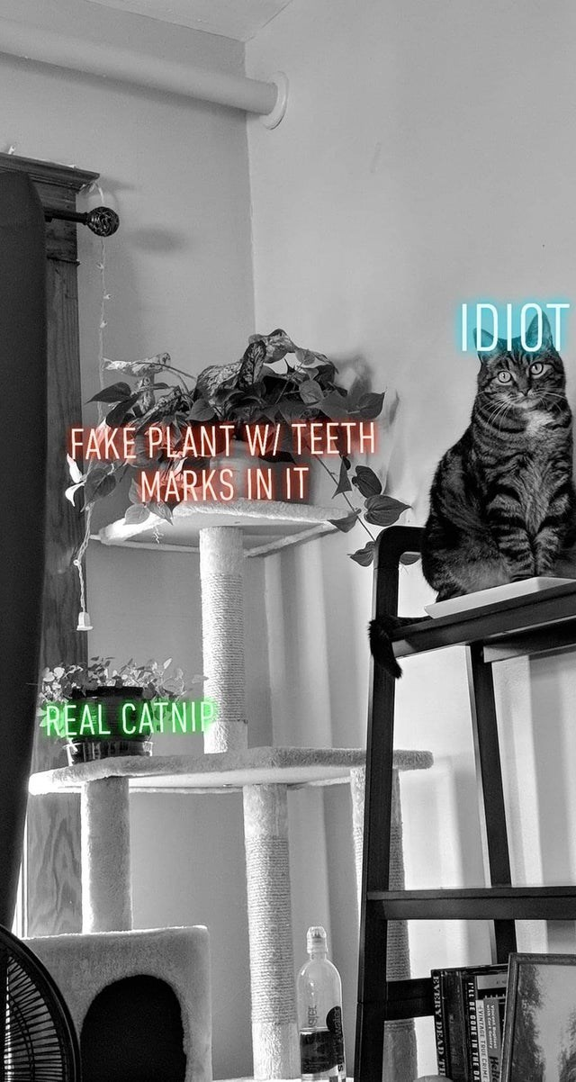 Font - IDIOT FAKE PLANT WI TEETH MARKS IN IT FREAL CATNI