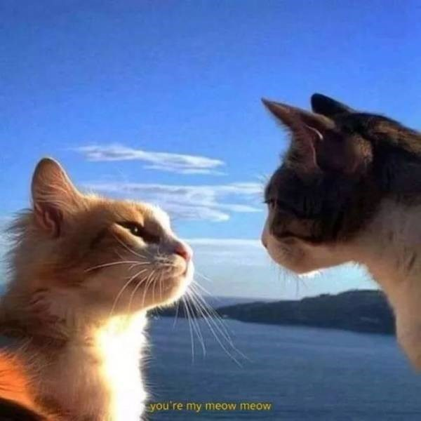 Cat - you're my meow meow