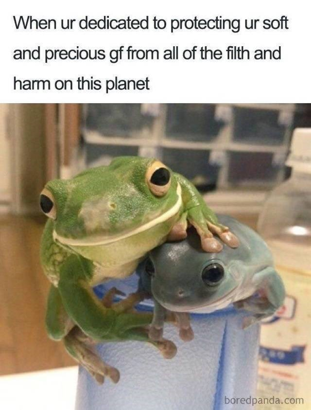 Frog - When ur dedicated to protecting ur soft and precious gf from all of the filth and harm on this planet boredpanda.com