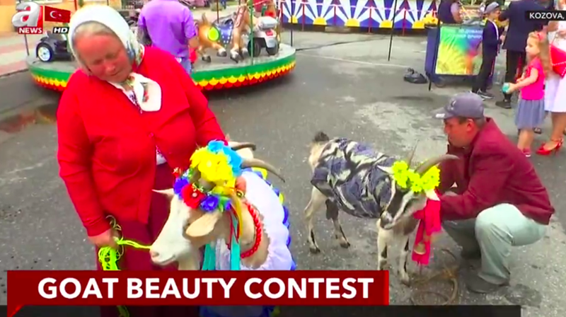 man and woman with two goats dressed up for beauty contest