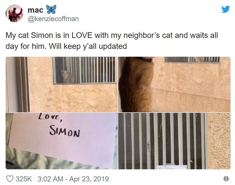 Text - mac @kenziecoffman My cat Simon is in LOVE with my neighbor's cat and waits all day for him. Will keep y'all updated LOVE, SIMON LSim 325K 3:02 AM - Apr 23, 2019
