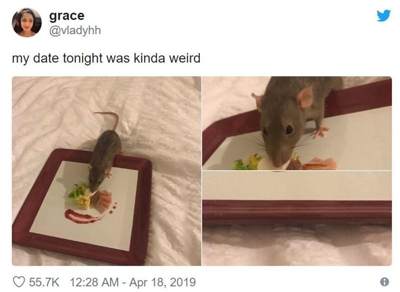 Rat - grace @vladyhh my date tonight was kinda weird 55.7K 12:28 AM Apr 18, 2019
