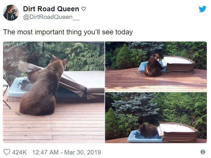 Tree - Dirt Road Queen @DirtRoadQueen The most important thing you'll see today 424K 12:47 AM Mar 30, 2019