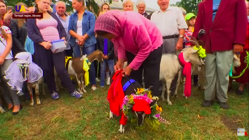 woman in front of crowd fixing goats costume