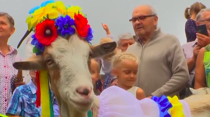 goat with flowers on head smiling looking happy in front of crowd