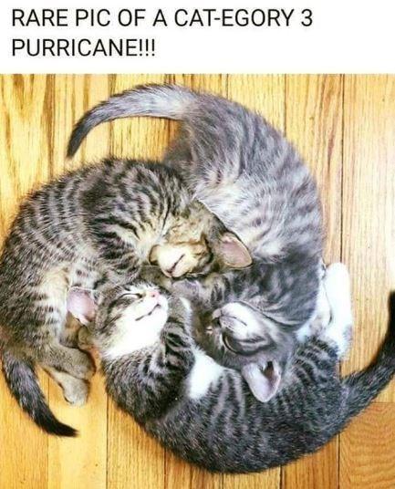 Memes Cats funny animals - 9345786624