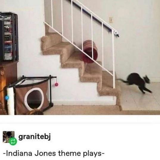 Indiana Jones Memes Cats funny animals - 9345787648