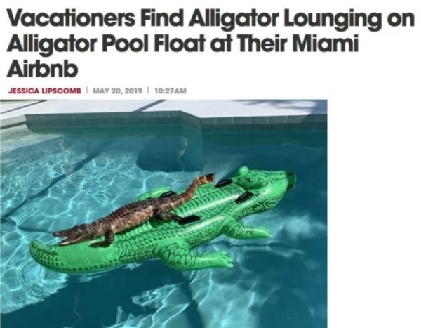 Adaptation - Vacationers Find Alligator Lounging on Alligator Pool Float at Their Miami Airbnb MAY 20, 2019 10:27AM JESSICA LIPSCOMB