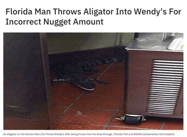Room - Florida Man Throws Aligator Into Wendy's For Incorrect Nugget Amount An alligator on the kitchen floor of a Florida Wendy's after being thrown into the drive-through. (Florida Fish and Wiildlife Conservation Commission)
