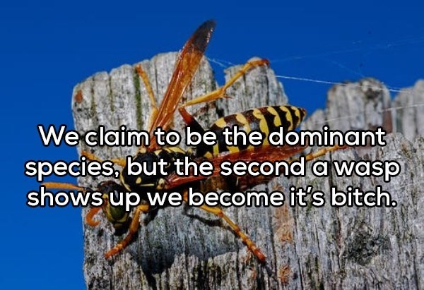 shower thought - Natural landscape - Weclaim to be the dominant species, but the second a wasp shows up we become it's bitch
