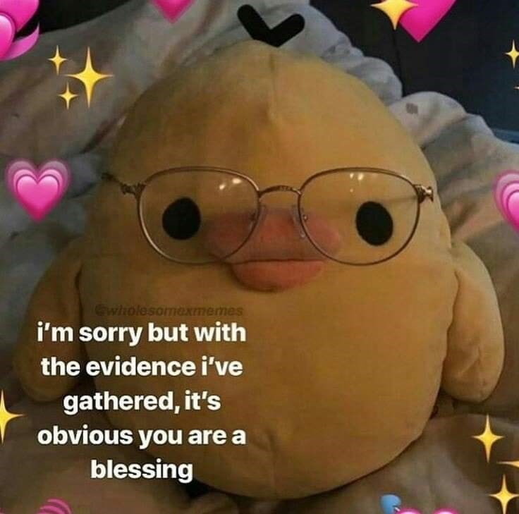 Stuffed toy - Gwholesomexmemes I'm sorry but with the evidence i've gathered, it's obvious you are a blessing