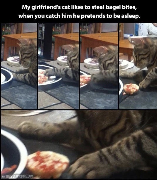 Cat - My girlfriend's cat likes to steal bagel bites, when you catch him he pretends to be asleep. V THEMETAPICTURE.COM