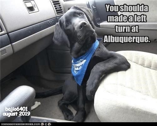 dog memes new mexico - 9345954816