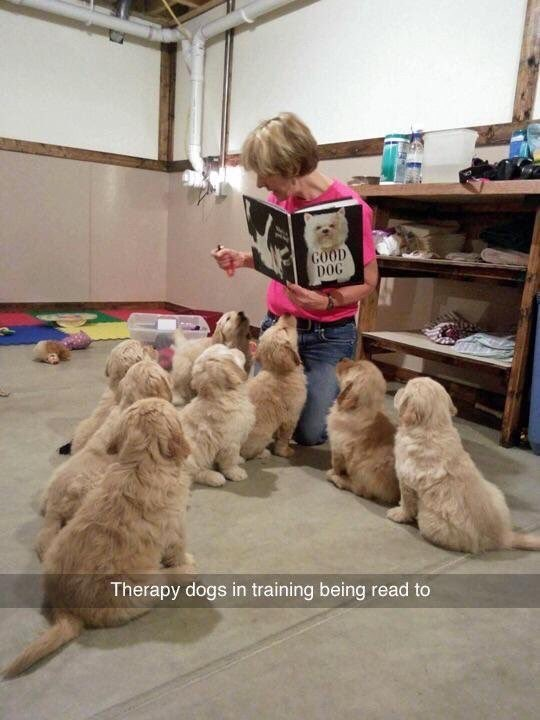 Vertebrate - GOOD DOG Therapy dogs in training being read to