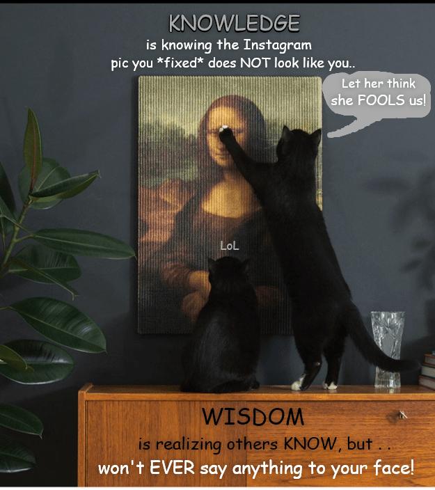 instagram knowledge cat memes - 9345974272