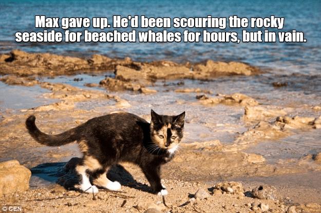beach cat memes - 9346061568