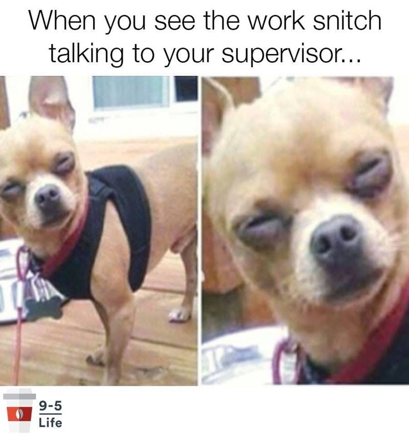meme - Mammal - When you see the work snitch talking to your supervisor... 9-5 Life