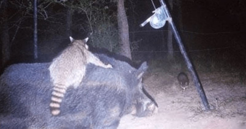 Pictures of wild animals taken at night.
