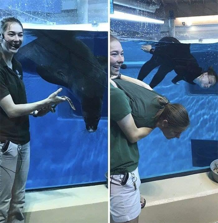 Zookeepers - Marine mammal