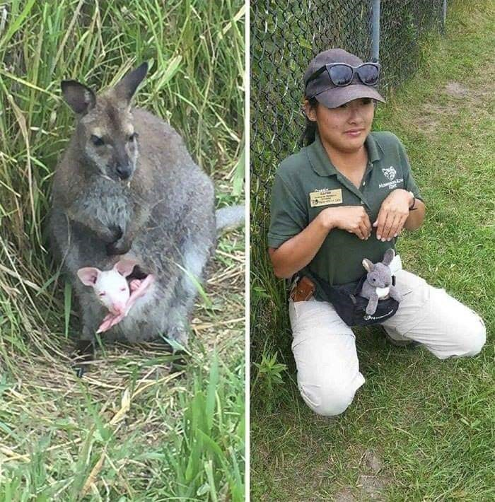 Zookeepers - Kangaroo - eesie