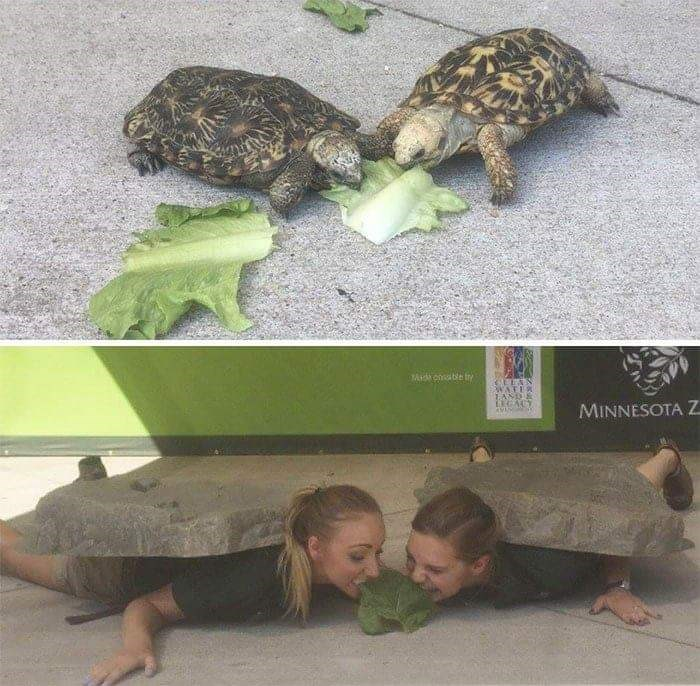 Zookeepers - Tortoise - Aid coa ble iy WATER TAND EGACY MINNESOTA Z