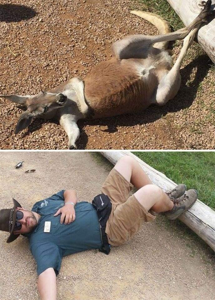 Zookeepers - Leg