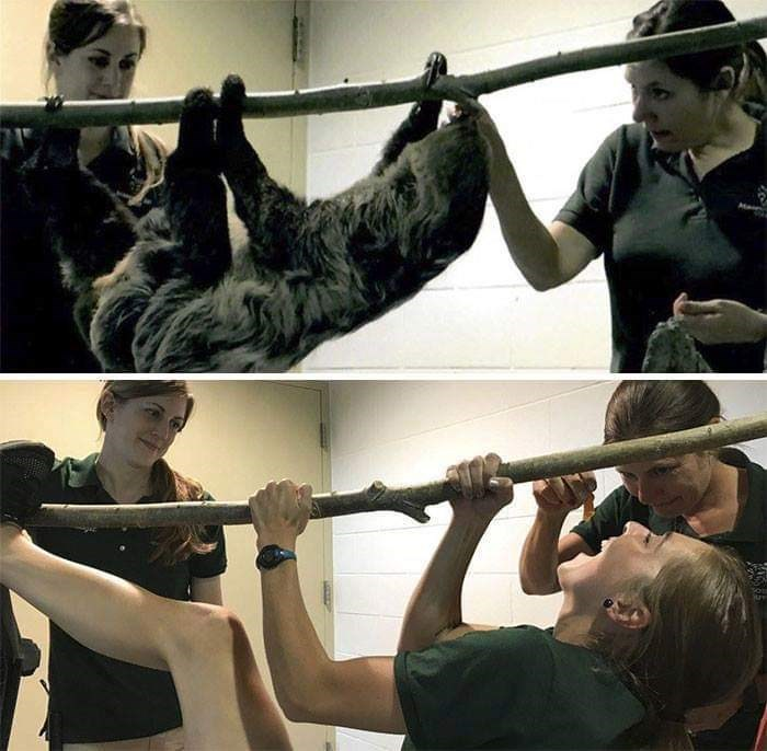 Zookeepers - Physical fitness