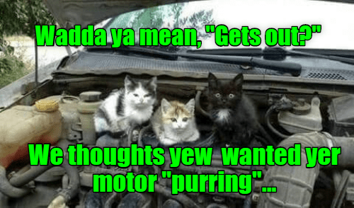 cat meme car mechanic purr - 9346328832