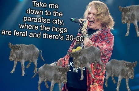meme - Goats - Take me down to the paradise city, where the hogs are feral and there's 30-50 UC ME