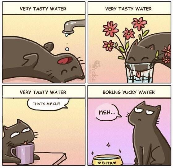 meme - Cartoon - VERY TASTY WATER VERY TASTY WATER VERY TASTY WATER BORING YUCKY WATER THATS MY CUP! MEH... DITA
