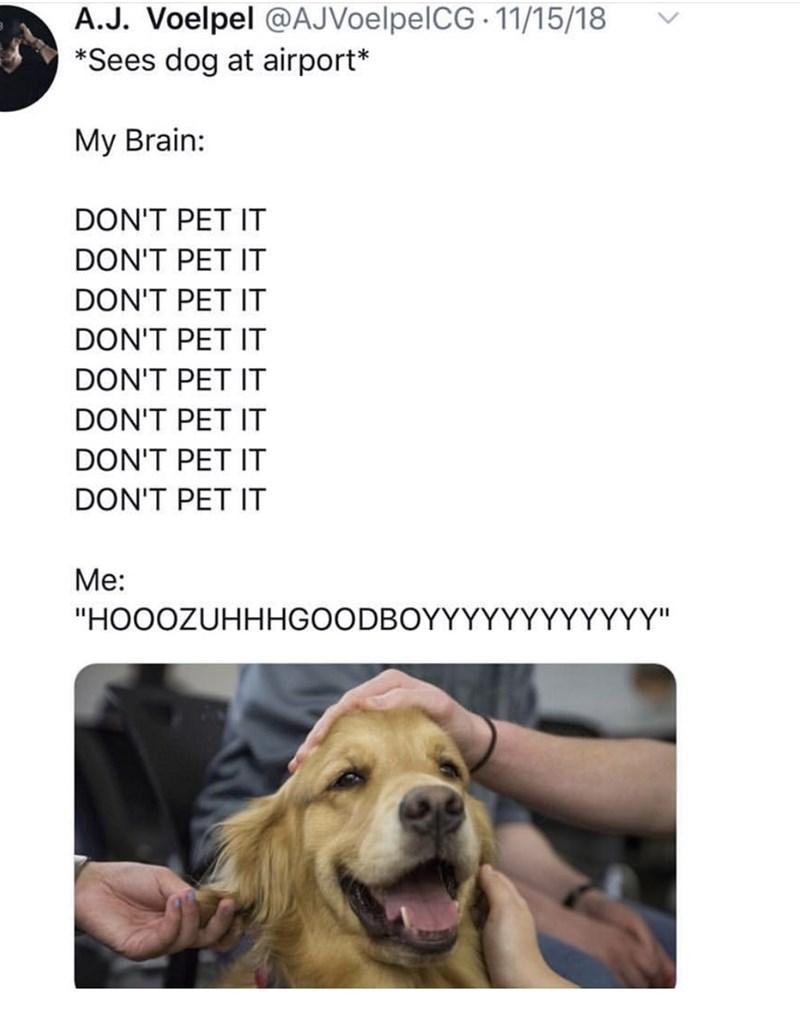 "Dog - A.J. Voelpel @AJVoelpelCG 11/15/18 *Sees dog at airport* My Brain: DON'T PET IT DON'T PET IT DON'T PET IT DON'T PET IT DON'T PET IT DON'T PET IT DON'T PET IT DON'T PET IT Me: ΥYΥ"" ""HOOOZUHHHGOODBOYYYY"