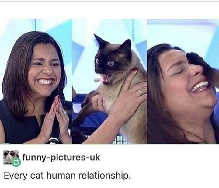 Cat - funny-pictures-uk Every cat human relationship.