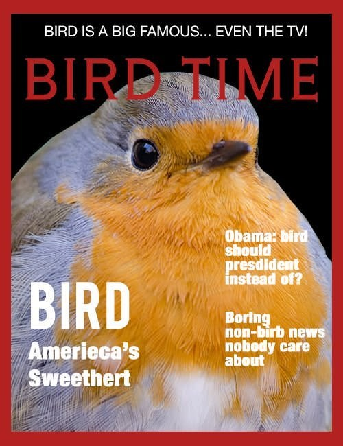"""Meme - """"BIRD IS A BIG FAMOUS.. EVEN THE TV! 'BIRD TIME;' Obama: bird should presdident instead of? Boring non-birb news nobody care about; Amerieca's Sweethert"""""""