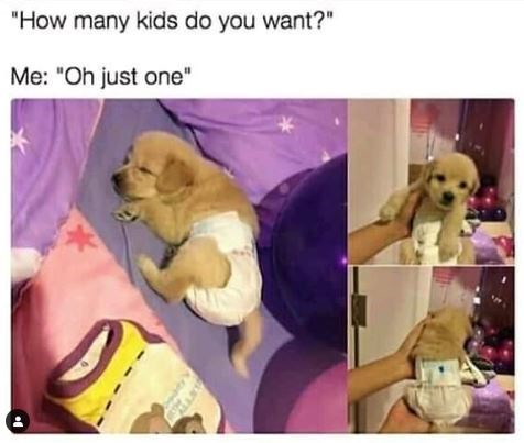 """Dog - """"How many kids do you want?"""" Me: """"Oh just one"""""""