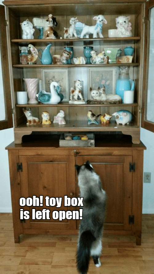 cabinets cat memes - 9346506240